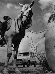 horse (France, 1961)